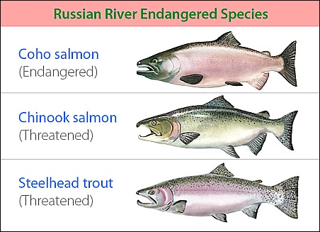 Russian River Endangered Species (SCWA)