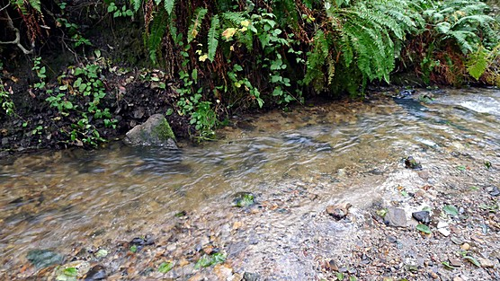 Marin County Stream
